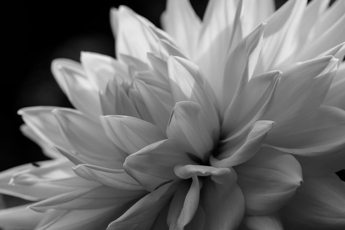 Blumenbilder Schwarz Weiß tag blumen resonance